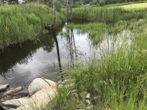 Läs mer om artikeln Sommarutflykt till våtmark och tvåstegsdike